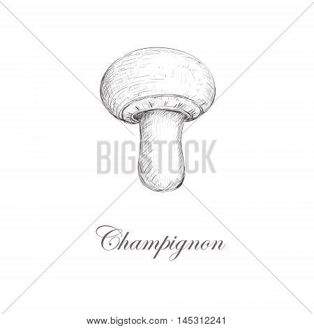 Champignon. Hand vector illustration mushrooms Champignon. Champignon.