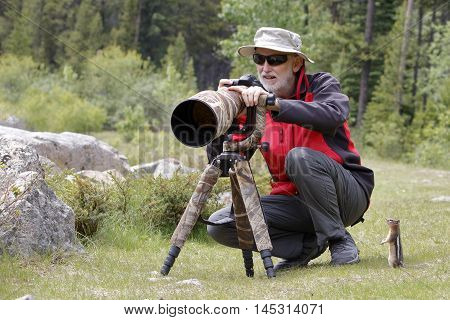 Golden-mantled Ground Squirrel Observing a Wildlife Photographer - Jasper National Park Alberta Canada