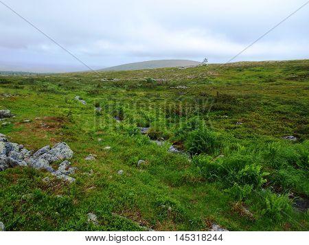 Green Lapland wilderness plants above arctic circle