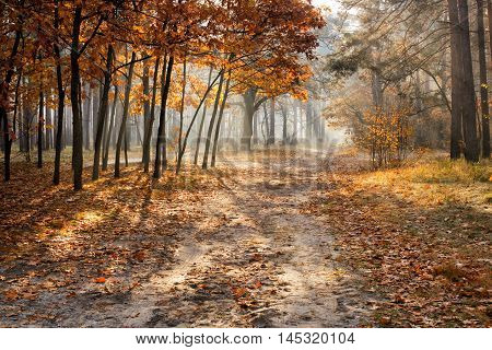 Beautiful fall scene in the morning forest with sunbeams