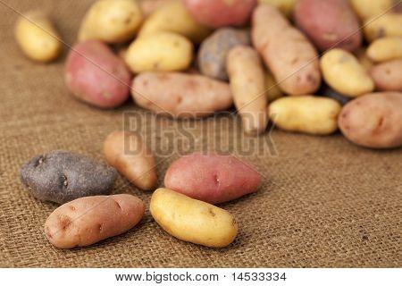 Fingerling Potato Variety