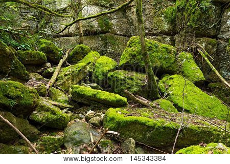 Green undergrowth with moss. Val del tasso (Rate Valley) Pazzon Caprino Veronese Verona Italy