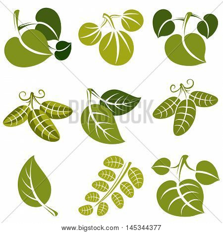 Set Of Vector Green Spring Leaves With Tendrils. Ecology Theme Design Elements, Gardening Symbol. Na