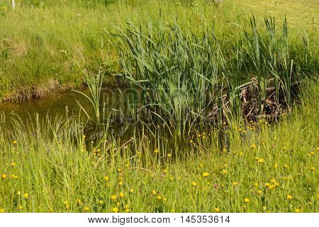 small biotope in a garden as a habitat for animals and plants