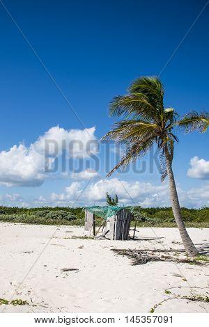 Beach with Palms at Playe del Carmen Mexico Yucatan