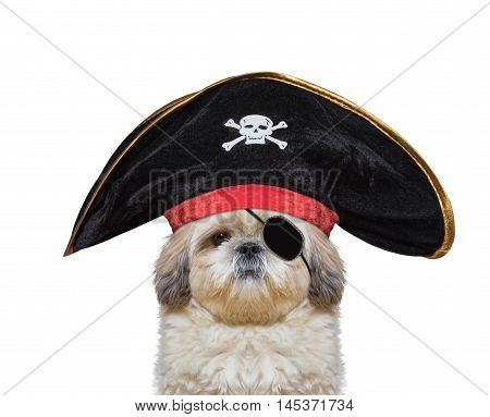 cute dog in a pirate costume -- isolated on white
