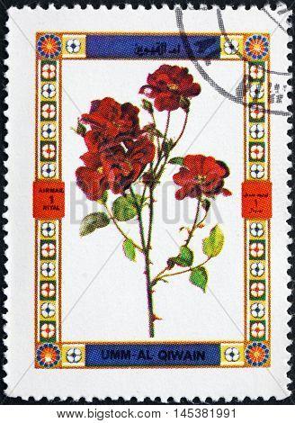 UMM AL-QUWAIN - CIRCA 1972: a stamp printed in the Umm al-Quwain shows Rose variety Flower circa 1972