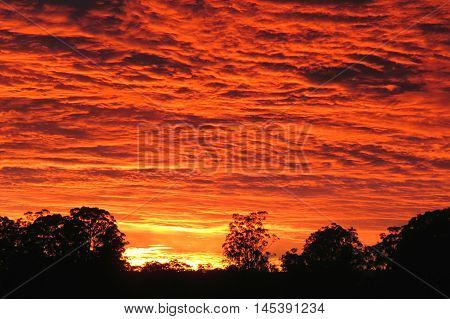 Australian bush sunrise through the clouds and silhouette of trees