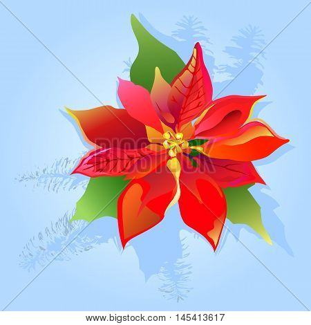 Christmas card with poinsettia and fir branch on blue grunge background vector illustration