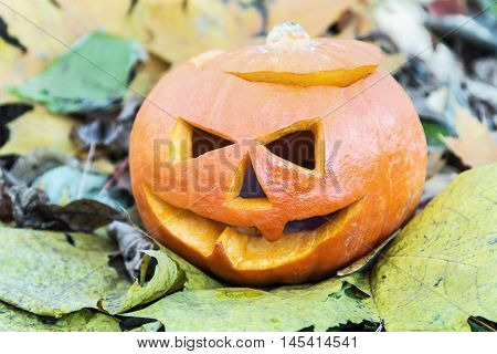 Jack Lantern for Halloween in autumn maple Laves in the forest