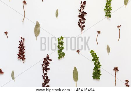 Pattern with Berberis thunbergii Stachys byzantina leaves and Stonecrop (Sedum) succulent plants on white background. Flat lay top view. poster