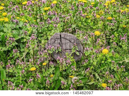 Stump On The Green Grass