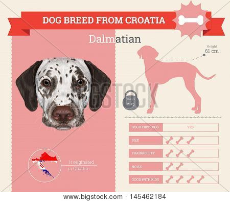 Dalmatian dog breed vector infographics. This dog breed from Croatia