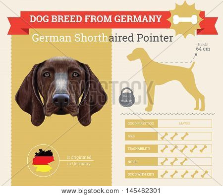 German Shorthaired Pointer dog breed vector infographics. This dog breed from German