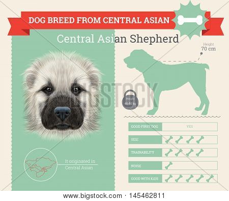 Central Asian Shepherd Dog breed vector infographics. This dog breed from Central Asia