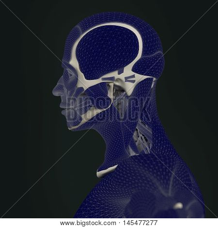 The mind, brain power and function, thought and thinking, memory loss. 3d illustration