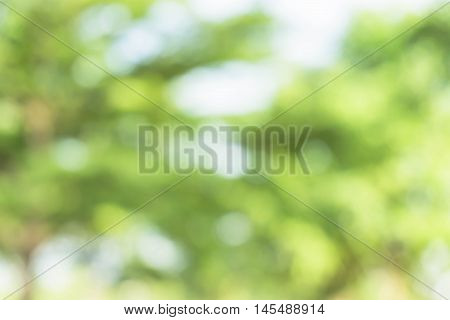 green bokeh / bokeh from tree / blurred tree and bokeh tree / Blurred park with bokeh background / Blurred nature background / green and white background from tree in sun light