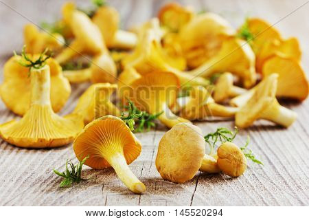 Yellow chanterelle or cantharellus cibarius forest mushrooms  on a rustic wooden background.