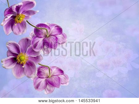 View of Japanese anemones on a faded flower background