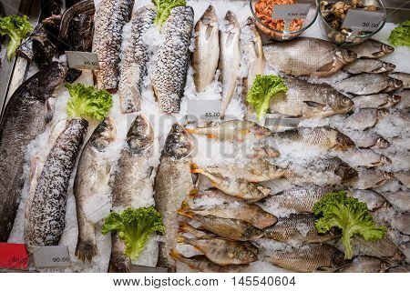 Sliced raw, not cooked fish, lying in the ice on the counter in the supermarket. Fresh fish