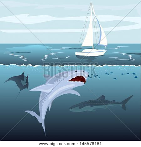 hungry shark attacks yacht ship from the ocean water
