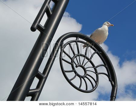 Seagull sat on post.