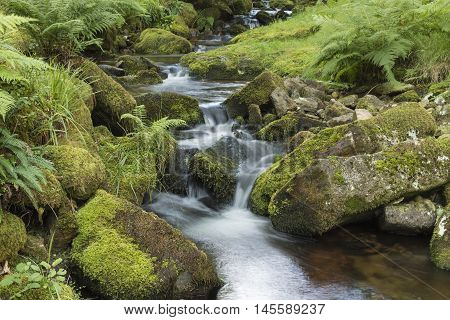 An image of a beautiful stream flowing through woodland in Dartmoor, Devon, England, UK