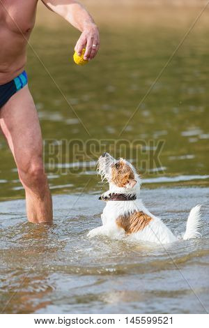 Man Plays With A Dog In The River