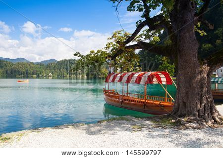 Traditional wooden boats at the pier of the Bled Island Lake Bled Slovenia.