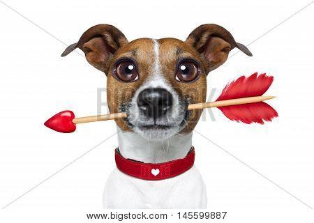 Valentines Rarrow Dog