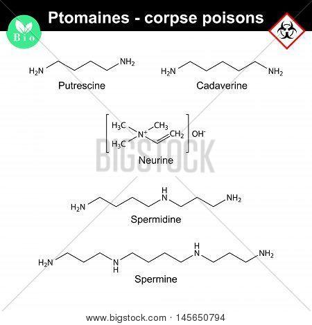 Ptomaines structures - putrescine cadaverine nuerine spermidine and spermine 2d vector illustration isolated on white background eps 8