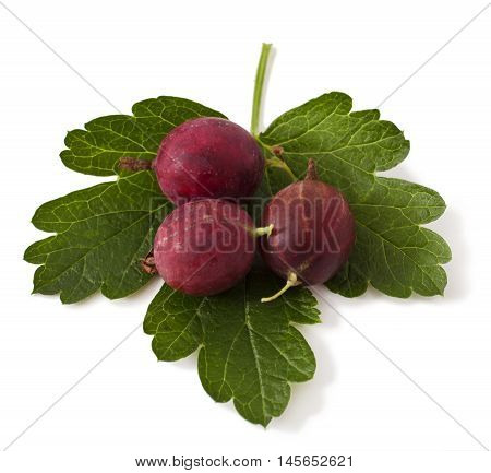 Ripe Gooseberries isolated on a white background
