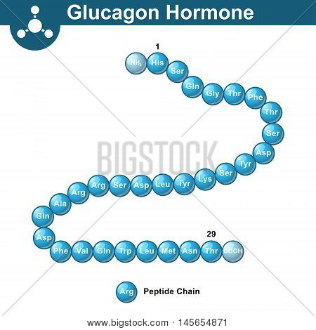 Glucagon hormone chemical structure 3d illustration vector on white background eps 10