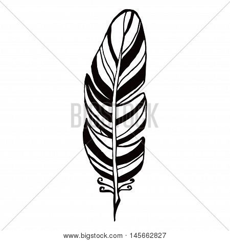 Hand Drawn Feathers. Ink Illustration Art Elements, Boho Design