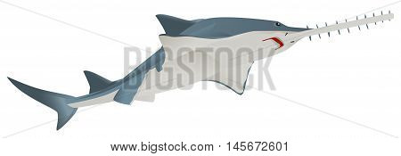 Fish saw sea animal. Isolated on white vector illustration