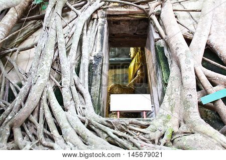 Root of the tree absorbing the ruins Wat Bang Kung Within the templeTemple in Thailand poster