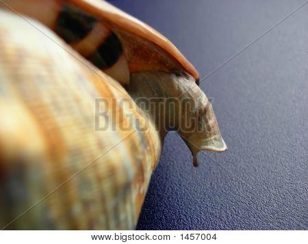 Shell Detail