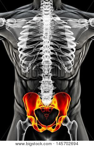man's body under X-rays. pelvis are highlighted in red. 3D illustration.
