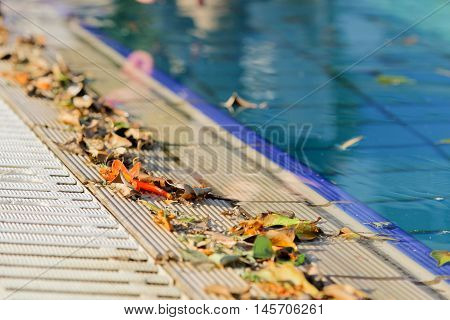 swimming pool board strewn with autumn leaves