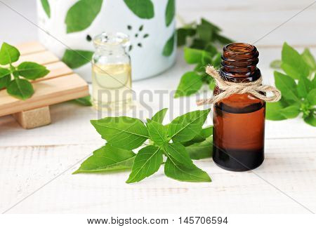 Basil essential aroma oil, fresh green plant leaves, aromalamp.