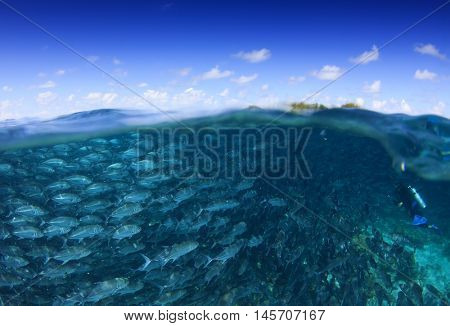 Ocean and Sky. Half and Half. Split image underwater fish and sea surface. Trevally fish and scuba diver