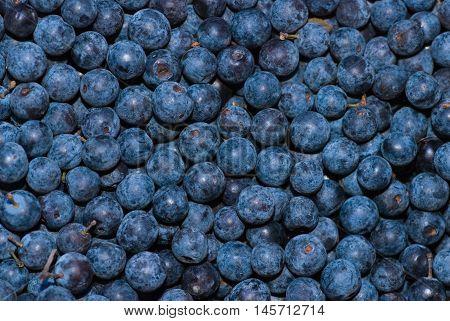 Huckleberry background flat focus, color image, horizontal image