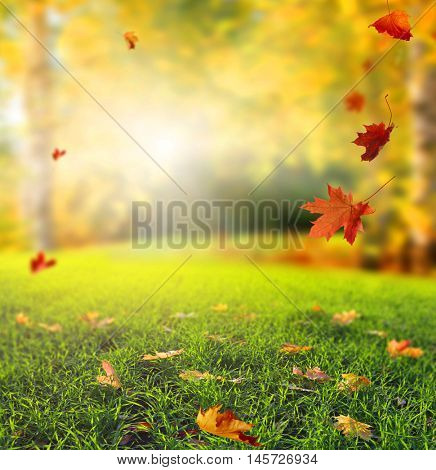 Beautiful autumn landscape with yellow trees,green grass and sun.  Colorful foliage in the park. Falling  leaves natural background
