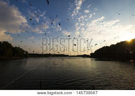 Red Hawk, Brahminy kite (Haliastur indus) flying on sky in Bang Chan, Khlung, Chanthaburi, Thailand poster