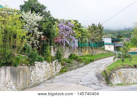 Beautiful flowering gardens in Abkhazia in April 2016.