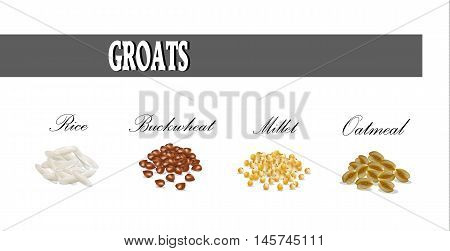 Groats set vector illustration. Millet buckwheat rice oatmeal