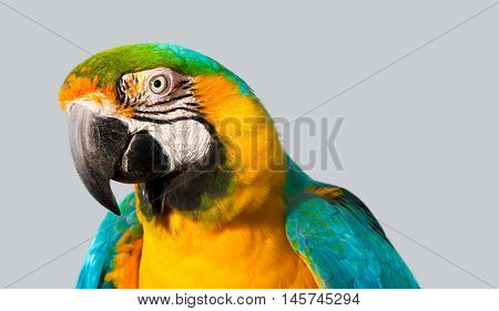 A curious macaw with blue and yellow feathers peeks attentively.