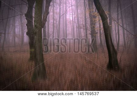 Conceptual photo from fantastic dreamy forest road covered with mist.Autumn forest. Forest road. Dreamy forest. Fallen leaves. Pale pink mist. Fog is a symbol of mystery.The photo used filter