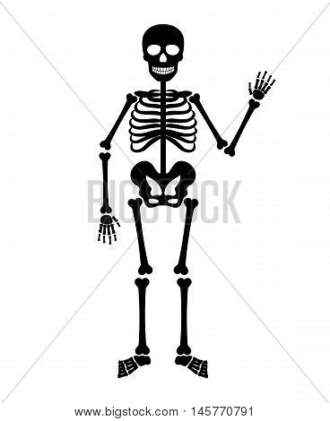 Skeleton human anatomy. Vector halloween black skeleton isolated on white