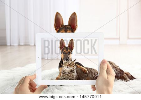 Male hands taking photo of cute puppy and cat on tablet.